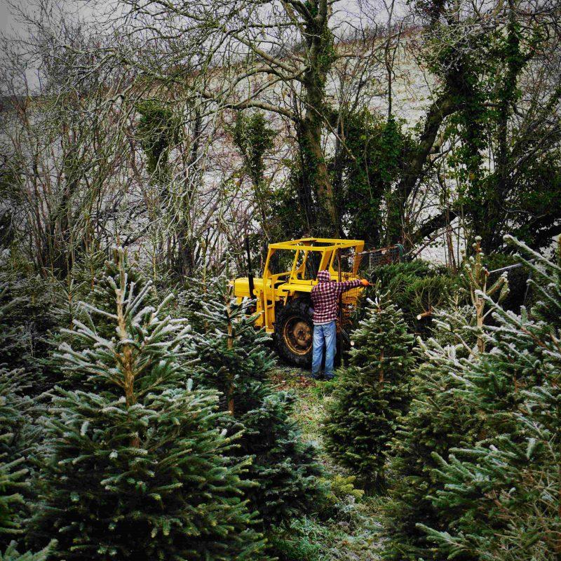 About - Greenmount Christmas Tree Farm